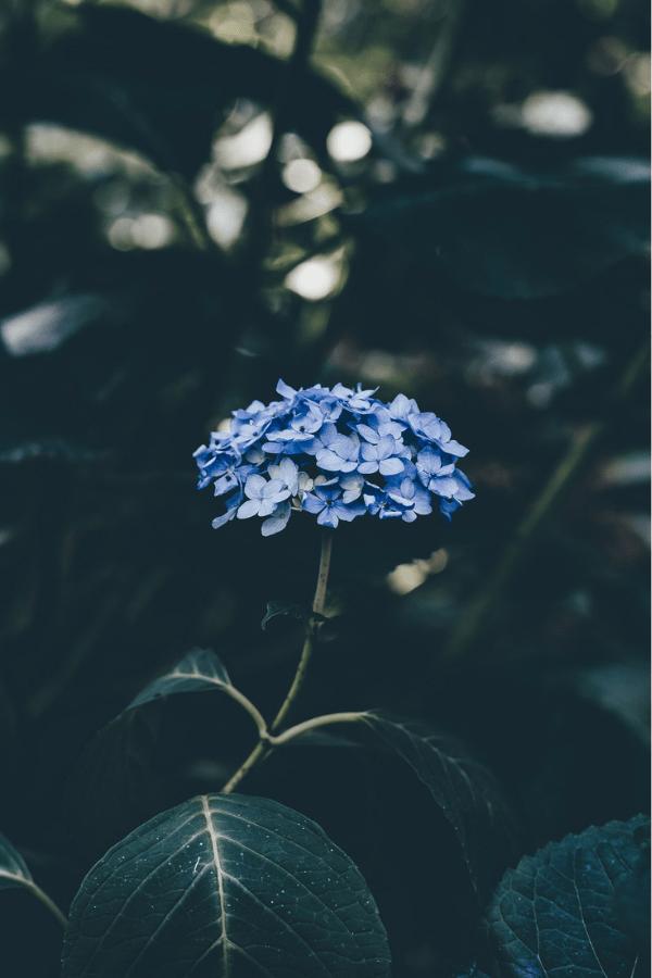 ravenclaw, ravenclaw wallpaper iphone, ravenclaw wallpaper, ravenclaw aesthetic blue, harry potter ravenclaw aesthetic, ravenclaw aesthetic dark, ravenclaw wallpaper aesthetic, ravenclaw aesthetic, blue flower, dark blue flower