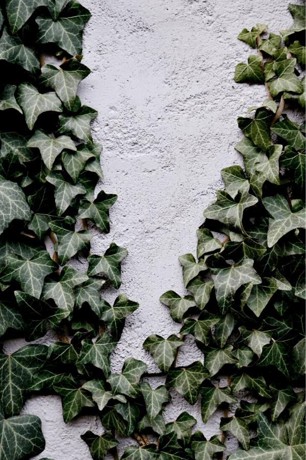 slytherin backgrounds, Slytherin background, Slytherin wallpaper, Slytherin aesthetic, Slytherin, slytherin common room, slytherin aesthetic wallpaper, slytherin pride, slytherin wallpaper iphone, slytherin wallpaper backgrounds, harry potter aesthetic, harry potter wallpaper