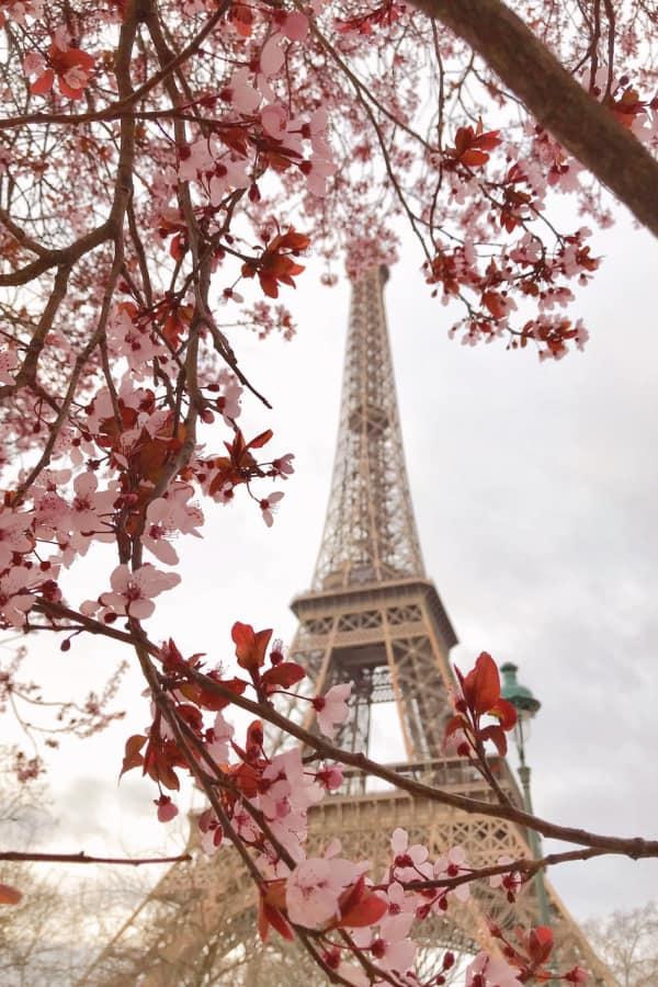 Paris wallpaper, Eiffel Tower wallpaper, flower aesthetic, flower wallpaper, pink flower aesthetic, white flower aesthetic, floral wallpaper iPhone, flower wallpaper iPhone, floral background