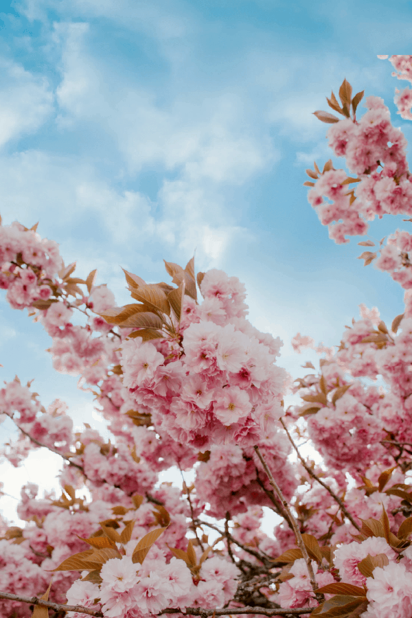 50+ Gorgeous Flower Aesthetic Wallpaper for your Iphone!