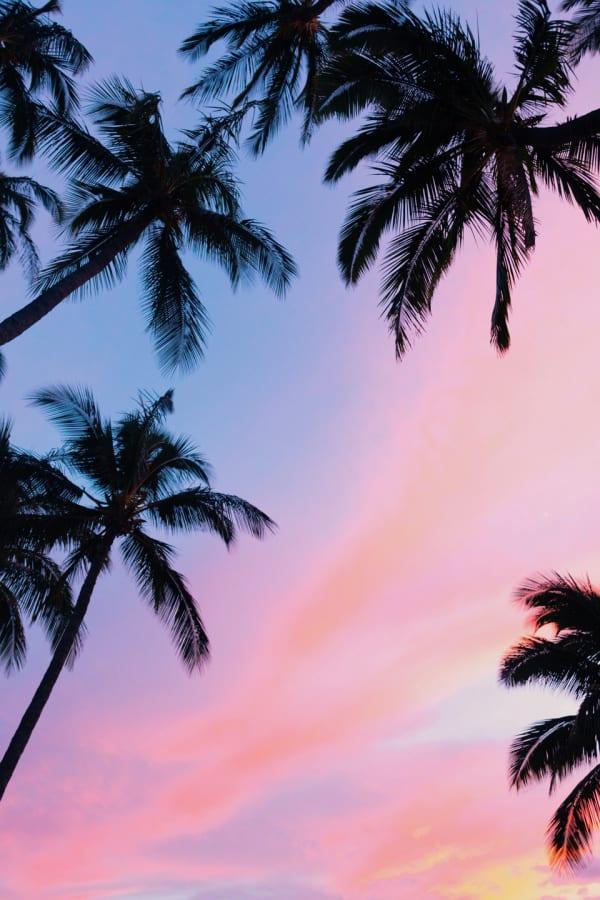 pink wallpaper, pink wallpaper iPhone, pink aesthetic, cute pink wallpaper, pink background, pink background iPhone, pink wallpaper girly, beach wallpaper, palm tree wallpaper, palm tree aesthetic, pastel cloud wallpaper