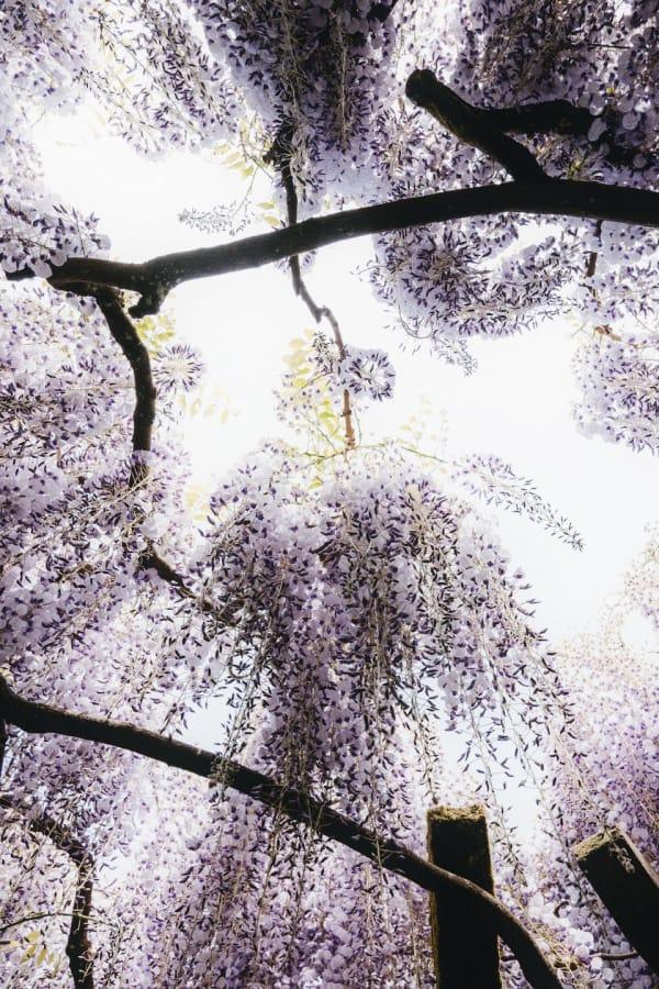 purple flower wallpaper, flower aesthetic, flower wallpaper, pink flower aesthetic, white flower aesthetic, floral wallpaper iPhone, flower wallpaper iPhone, floral background