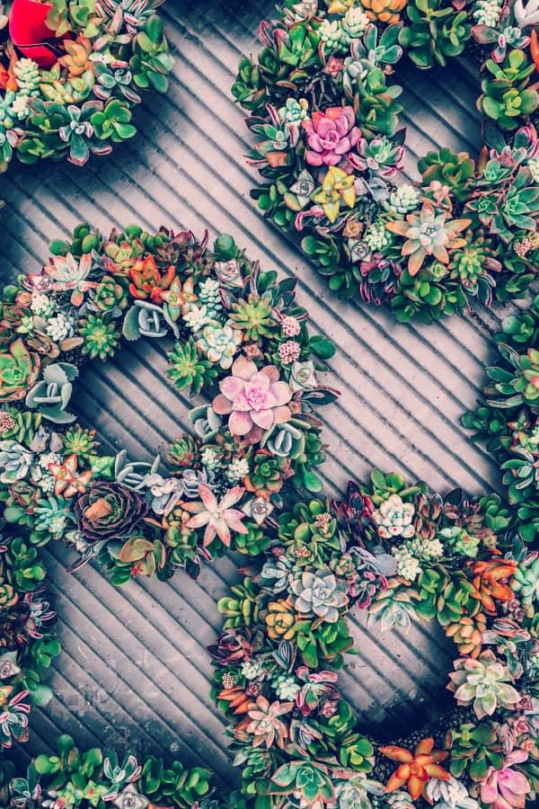 succulent wallpaper, flower aesthetic, flower wallpaper, pink flower aesthetic, white flower aesthetic, floral wallpaper iPhone, flower wallpaper iPhone, floral background