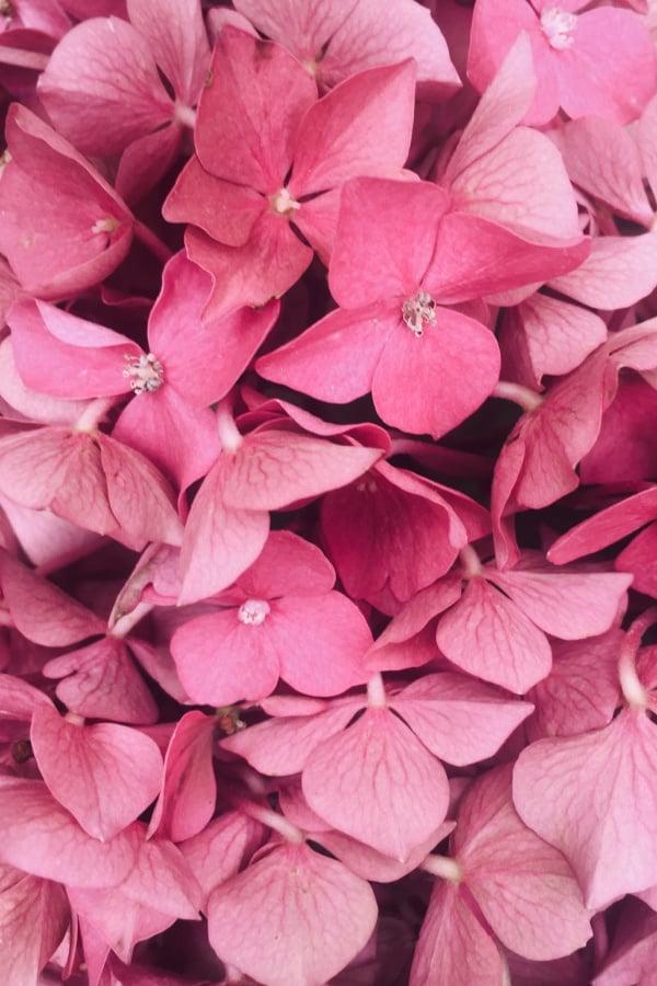 pink flowers, flower aesthetic, flower wallpaper, pink flower aesthetic, white flower aesthetic, floral wallpaper iPhone, flower wallpaper iPhone, floral background