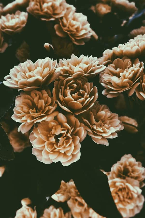 dark flower aesthetic, flower aesthetic, flower wallpaper, pink flower aesthetic, white flower aesthetic, floral wallpaper iPhone, flower wallpaper iPhone, floral background