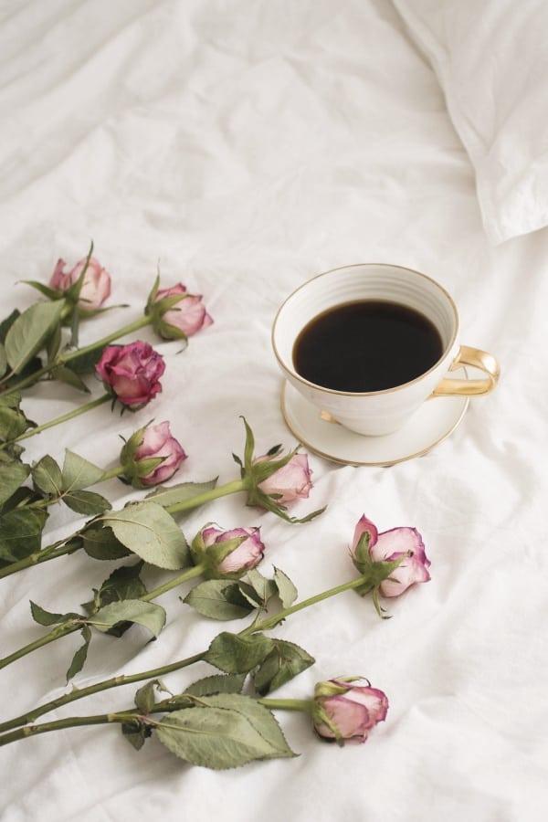 pink roses, flower aesthetic, flower wallpaper, pink flower aesthetic, white flower aesthetic, floral wallpaper iPhone, flower wallpaper iPhone, floral background