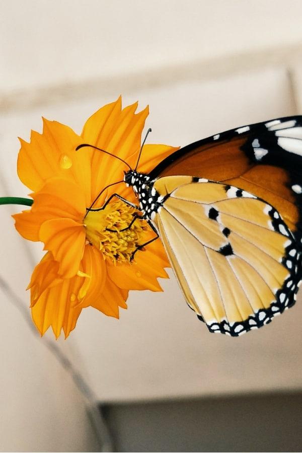 flower aesthetic wallpaper, flower aesthetic, flower wallpaper, pink flower aesthetic, white flower aesthetic, floral wallpaper iPhone, flower wallpaper iPhone, floral background, butterfly wallpaper