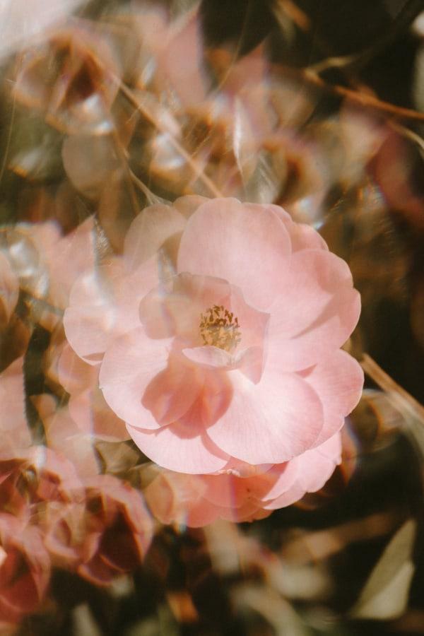 flower aesthetic wallpaper, flower aesthetic, flower wallpaper, pink flower aesthetic, white flower aesthetic, floral wallpaper iPhone, flower wallpaper iPhone, floral background