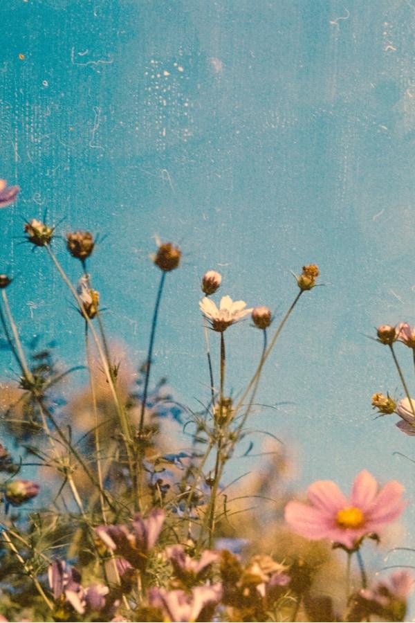 flower aesthetic wallpaper, flower aesthetic, flower wallpaper, pink flower aesthetic, white flower aesthetic, floral wallpaper iPhone, flower wallpaper iPhone, floral background, vintage wallpaper