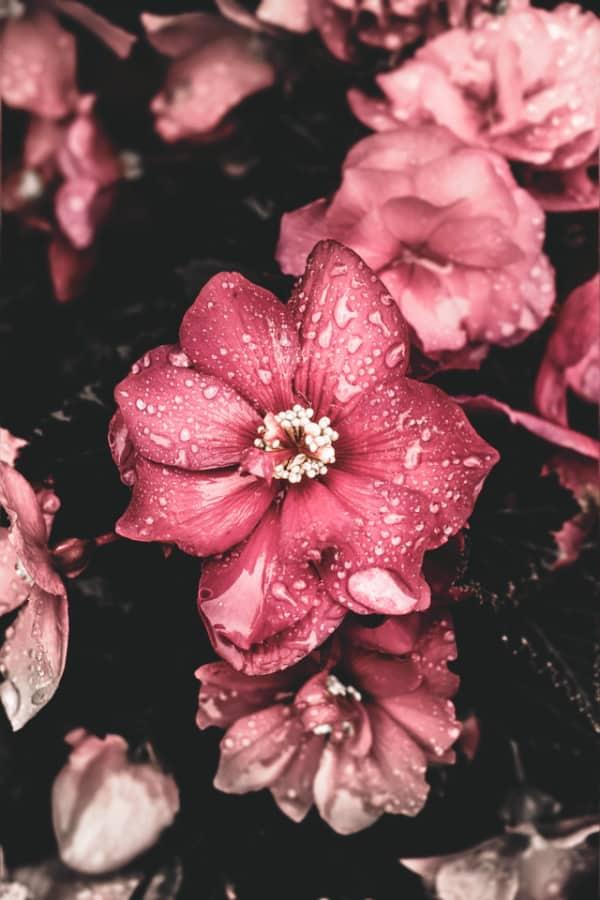 flower aesthetic, flower wallpaper, pink flower aesthetic, white flower aesthetic, floral wallpaper iPhone, flower wallpaper iPhone, floral background
