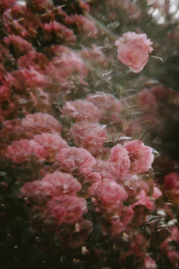 flower aesthetic wallpaper, flower aesthetic, flower wallpaper, pink flower aesthetic, white flower aesthetic, floral wallpaper iPhone, flower wallpaper iPhone, floral background, pink flowers