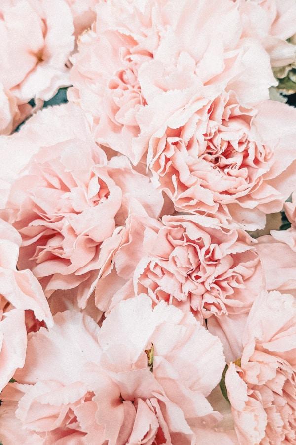 flower aesthetic wallpaper, flower aesthetic, flower wallpaper, pink flower aesthetic, white flower aesthetic, floral wallpaper iPhone, flower wallpaper iPhone, floral background, pink peonies wallpaper, peonies wallpaper