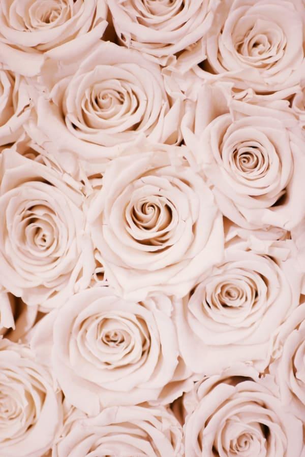 flower aesthetic wallpaper, flower aesthetic, flower wallpaper, pink flower aesthetic, white flower aesthetic, floral wallpaper iPhone, flower wallpaper iPhone, floral background, pink rose wallpaper, rose wallpaper