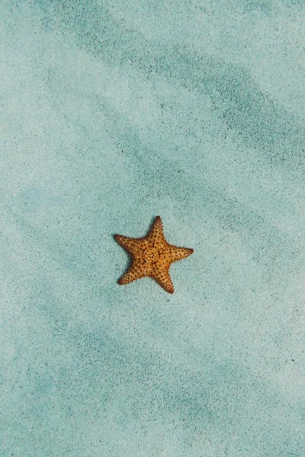 star fish, ocean wallpaper, under the sea, beach wallpaper, beach background, paradise wallpaper