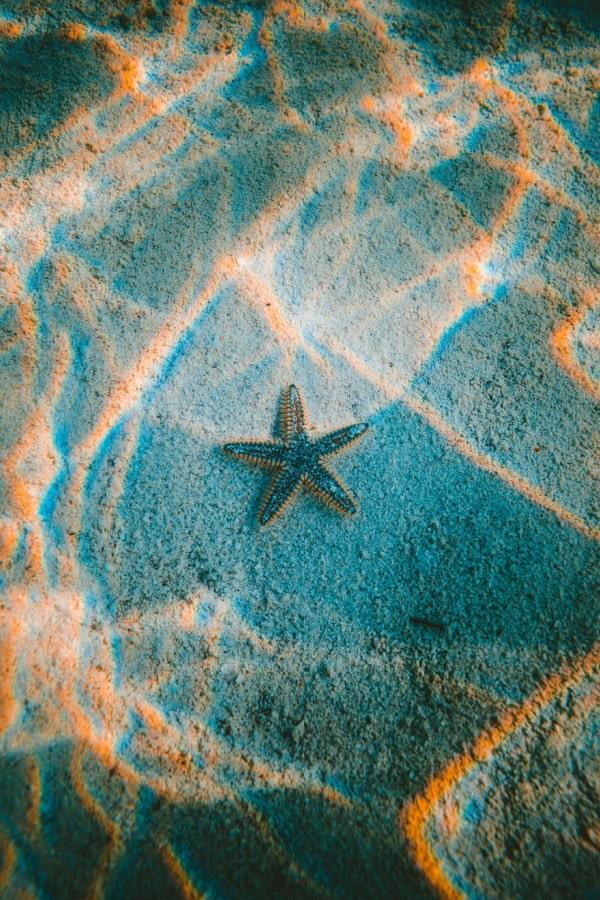 blue aesthetic, ocean aesthetic, star fish, beach aesthetic