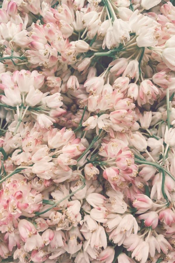 pink aesthetic, flower aesthetic, flower wallpaper, pink flower aesthetic, white flower aesthetic, floral wallpaper iPhone, flower wallpaper iPhone, floral background