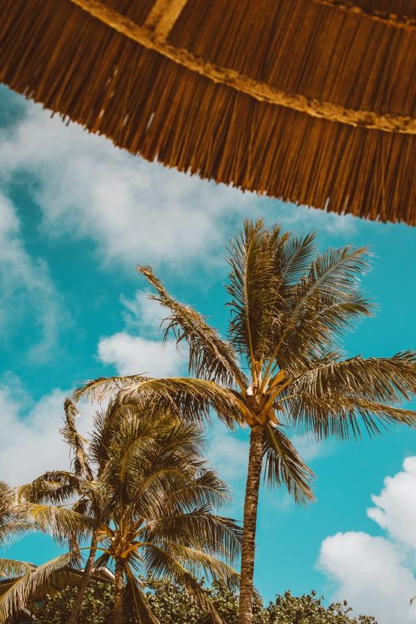 beach aesthetic, beach wallpaper, palm tree wallpaper, palm tree background