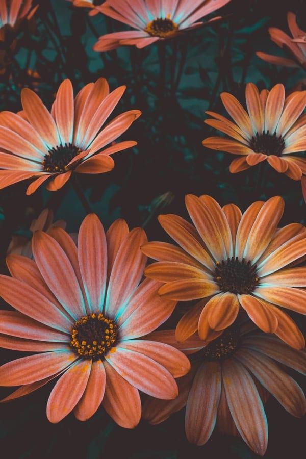 orange flowers, flower aesthetic, flower wallpaper, pink flower aesthetic, white flower aesthetic, floral wallpaper iPhone, flower wallpaper iPhone, floral background