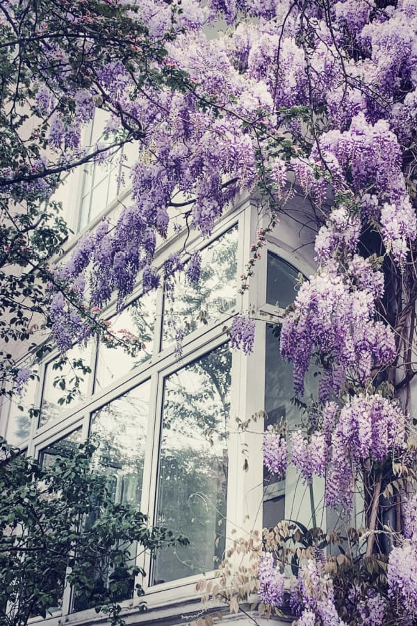 purple flowers, flower aesthetic, flower wallpaper, pink flower aesthetic, white flower aesthetic, floral wallpaper iPhone, flower wallpaper iPhone, floral background