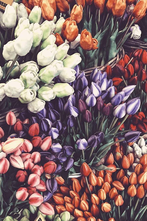 flower aesthetic wallpaper, flower aesthetic, flower wallpaper, pink flower aesthetic, white flower aesthetic, floral wallpaper iPhone, flower wallpaper iPhone, floral background, tulip wallpaper