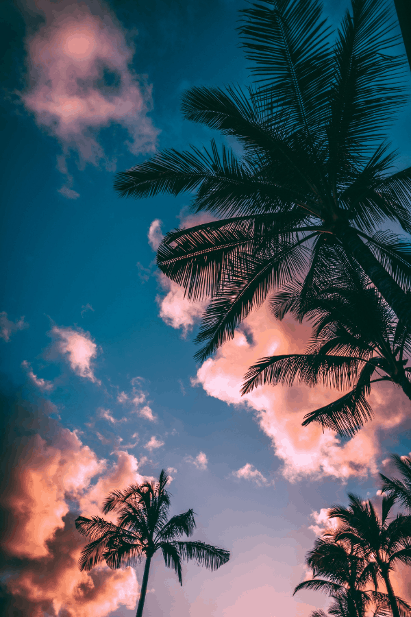 beach wallpaper iPhone, palm trees, pink clouds, cotton candy clouds, palm aesthetic, palm trees, vacation wallpaper