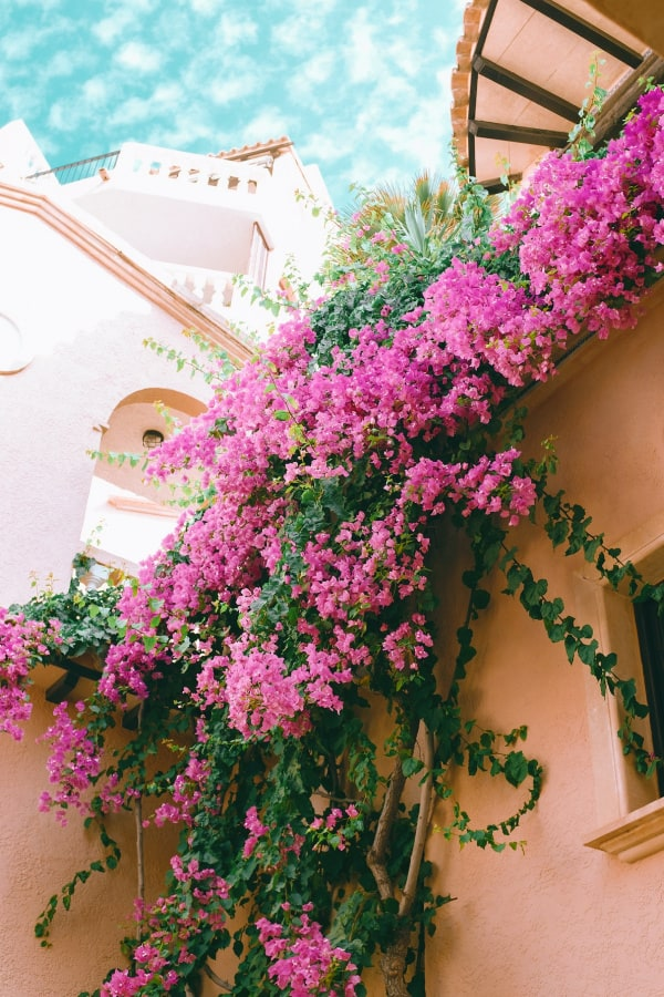 pink wallpaper, pink wallpaper iPhone, pink aesthetic, cute pink wallpaper, pink background, pink background iPhone, pink wallpaper girly