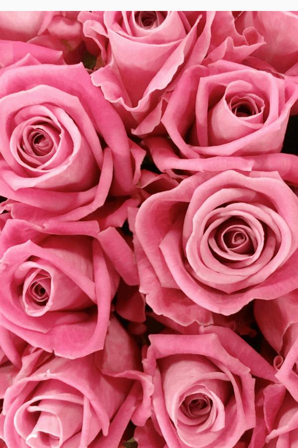 roses, rose wallpaper, rose wallpaper iPhone, rose wallpaper aesthetic, rose wallpaper hd, rose aesthetic, pink rose wallpaper, pink roses