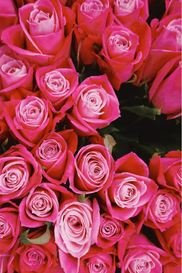 roses, rose wallpaper, rose wallpaper iPhone, rose wallpaper aesthetic, rose wallpaper hd, rose aesthetic, pink roses, pink roses wallpaper