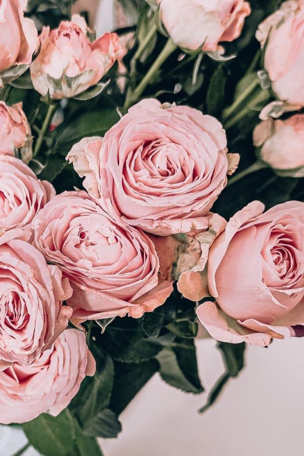 roses, rose wallpaper, rose wallpaper iPhone, rose wallpaper aesthetic, rose wallpaper hd, rose aesthetic, pink roses, rose bouquet