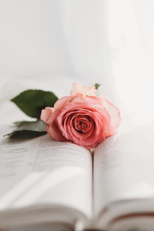 roses, rose wallpaper, rose wallpaper iPhone, rose wallpaper aesthetic, rose wallpaper hd, rose aesthetic, pink rose, pink rose aesthetic