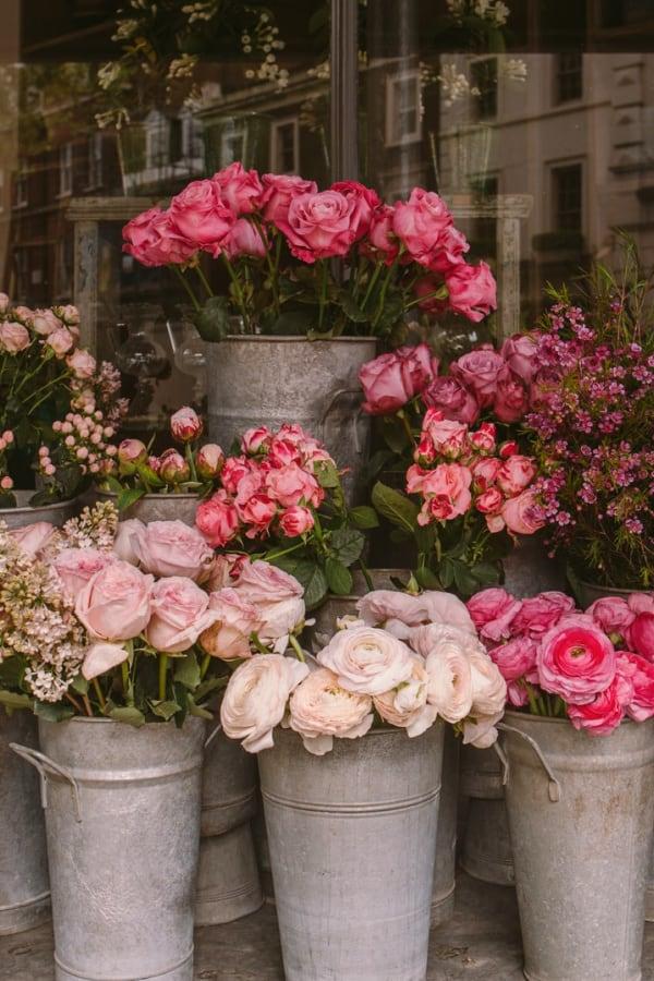 roses, rose wallpaper, rose wallpaper iPhone, rose wallpaper aesthetic, rose wallpaper hd, rose aesthetic, roses, rose wallpaper