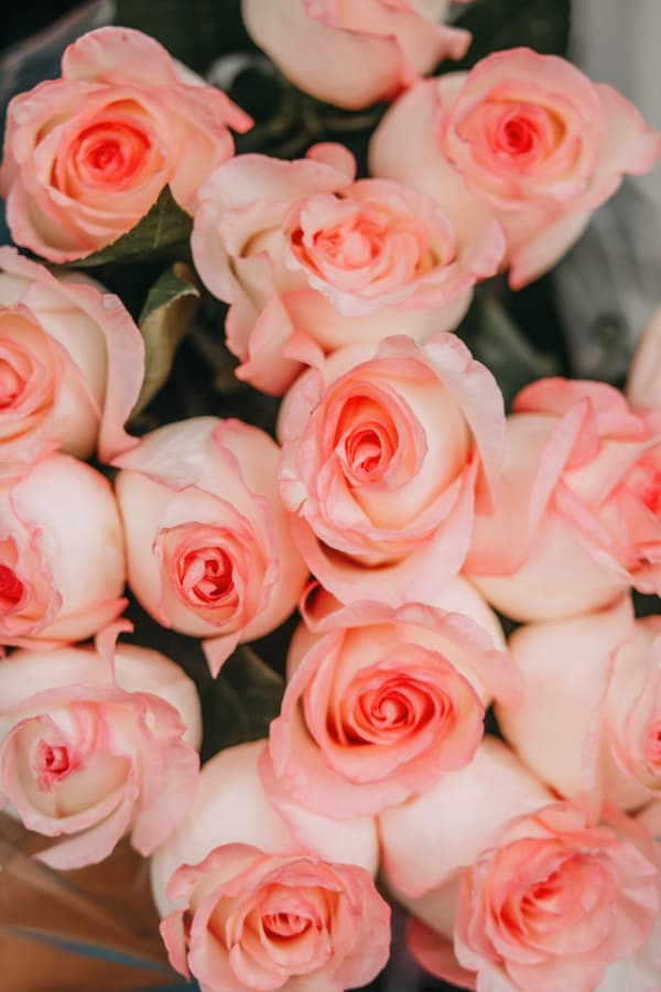 roses, rose wallpaper, rose wallpaper iPhone, rose wallpaper aesthetic, rose wallpaper hd, rose aesthetic, peach roses, peach rose wallpaper