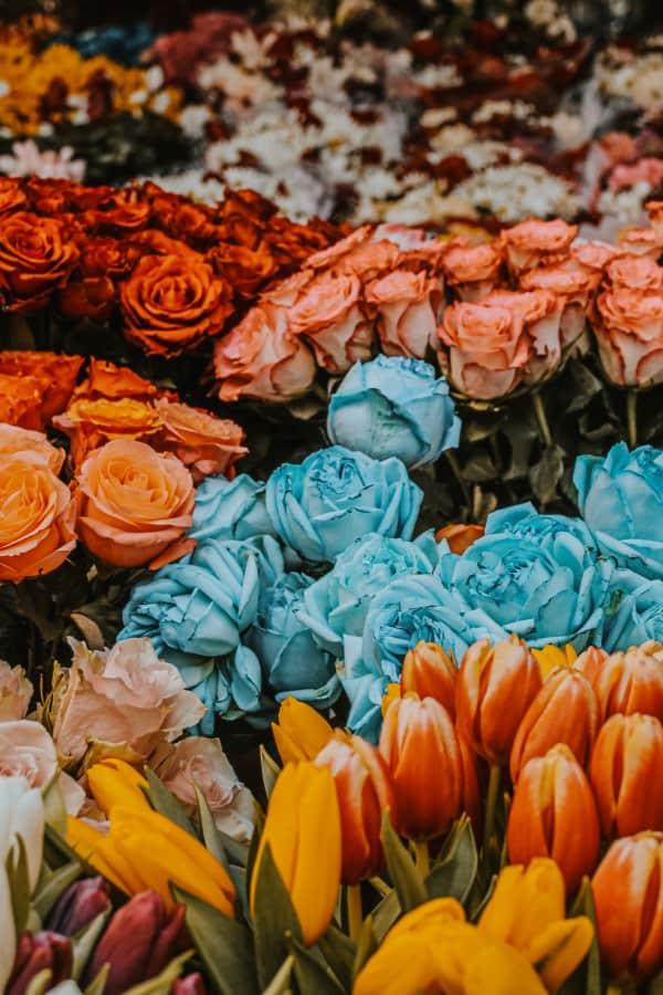 roses, rose wallpaper, rose wallpaper iPhone, rose wallpaper aesthetic, rose wallpaper hd, rose aesthetic