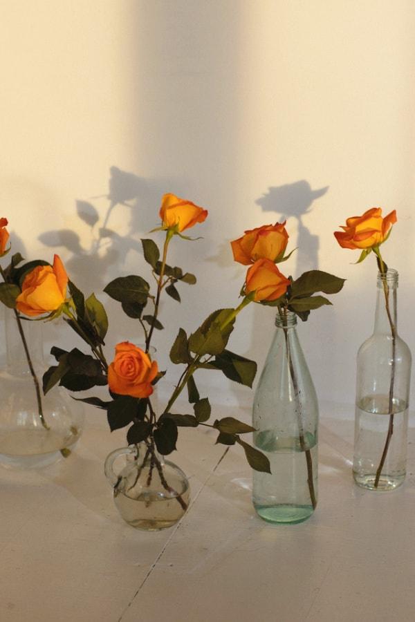 roses, rose wallpaper, rose wallpaper iPhone, rose wallpaper aesthetic, rose wallpaper hd, rose aesthetic, cottagecore