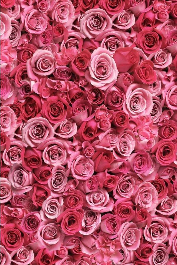 40+ Rose Aesthetic Wallpaper for your iPhone!  Prada & Pearls