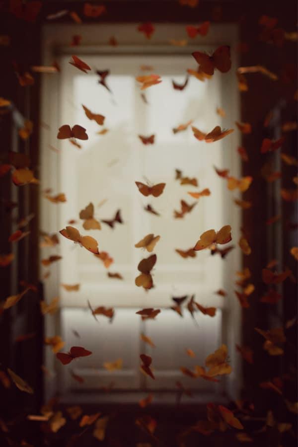 dark academia, dark academia wallpaper, dark academia aesthetic, dark academia background, dark academia background iPhone, dark academia wallpaper iPhone, butterfly aesthetic, butterfly wallpaper, butterfly background