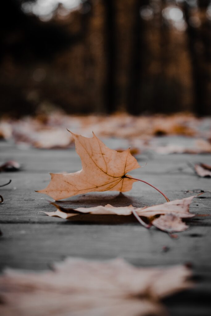 tips to prepare your home for winter, fall leaves